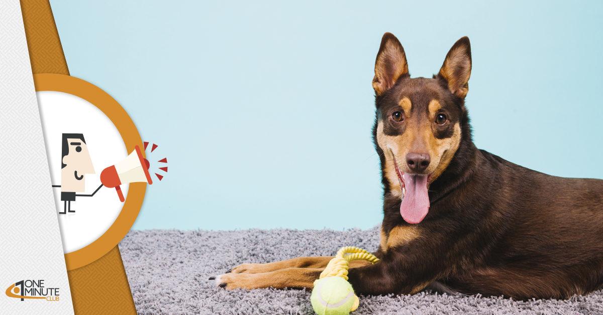 La startup per cani Smartosso che vola dalla Calabria a Las Vegas